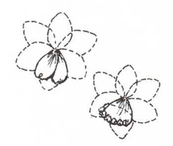 Воронка цветка